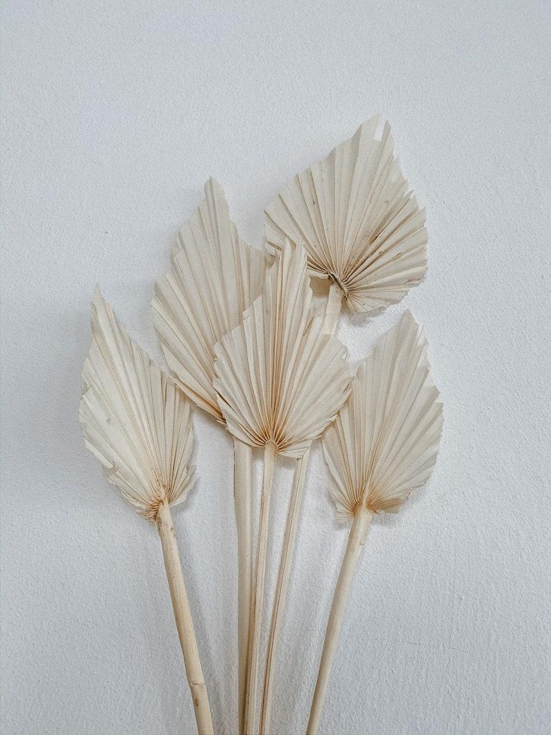 Palmenblätter, gebleicht |5 Stück