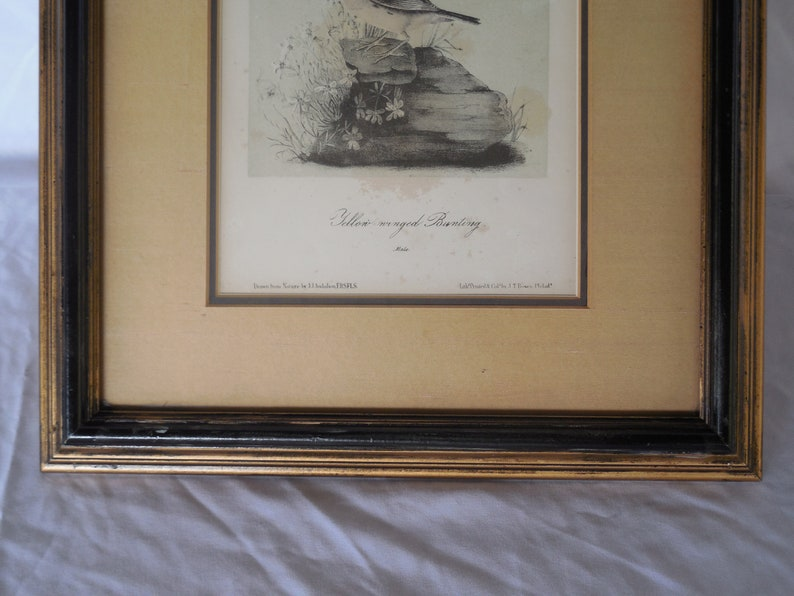 Vintage pre-owned Yellow Bunting Male Bird Lithograph Art Print Matted in Wooden Frame