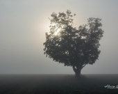 All Alone – Fine Art Print, Tree in the Fog, Landscape Photography, Gifts for Nature Lovers, Fog