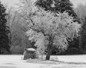Icy Business – A Fine Art Print of an Outhouse & Tree in an Ice Storm