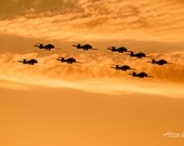 Canadian Forces Snowbirds, Performing at Sunset at Airshow London