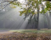 Ray of Sunshine – Fine Art Print, Sunshine in the Fog, Landscape Photography, Gifts for Nature Lovers, Fog