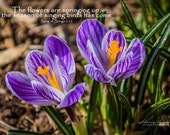The Colours of Spring | Fine Art Print, landscape photography, words of comfort