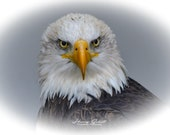 Eagle Portrait – Fine Art Print, Bald Eagle, Bald Eagle Photography, Wildlife Photography, Eagle Art, Majestic Bald Eagle