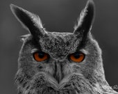 Eurasian Eagle Owl | Primarily a Nocturnal Hunter, One of the Largest Owls in the World, Has Distinctive Orange Colored Eyes