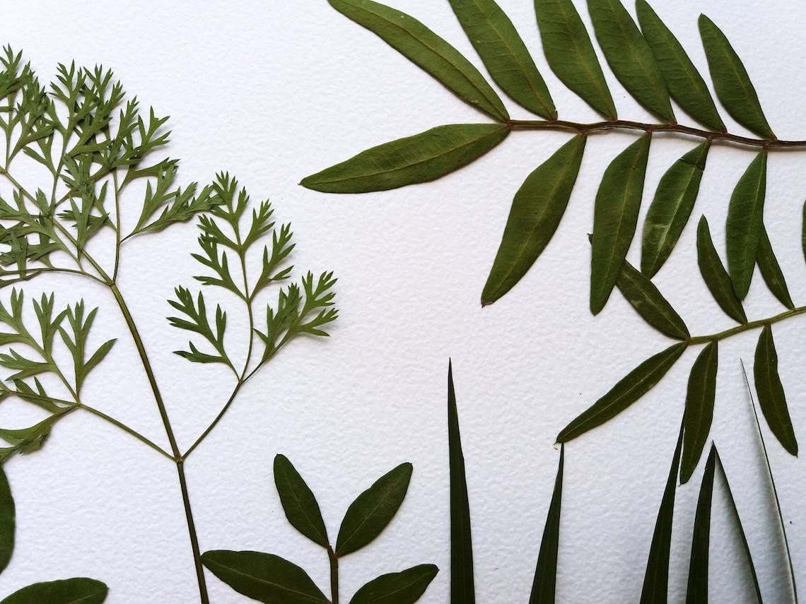 25 gepresste grüne blätter zum basteln karte machen für  etsy