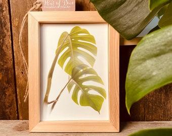 Delicious window leaf