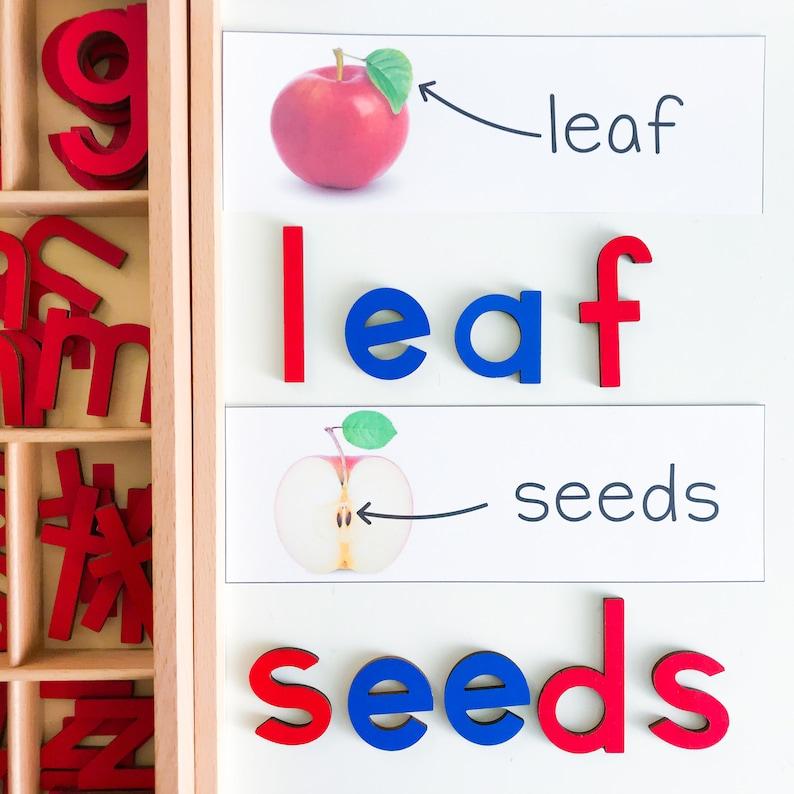 Printables for Preschool Apple Theme Vocabulary Kindergarten Homeschool