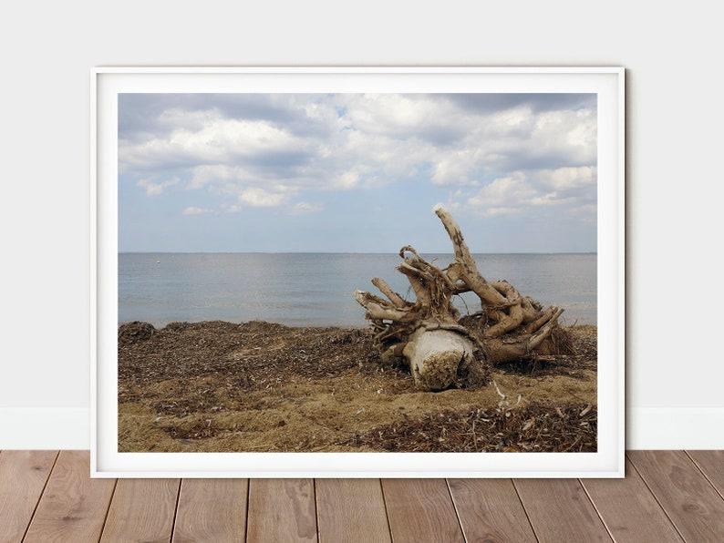 Driftwood Print  Beach Photography  Moody Beach Wall Art  Greek Beach Print  Large Coastal Print
