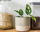 Monkey Mask plant Handmade Concrete Plant Pot Monstera Adansonii
