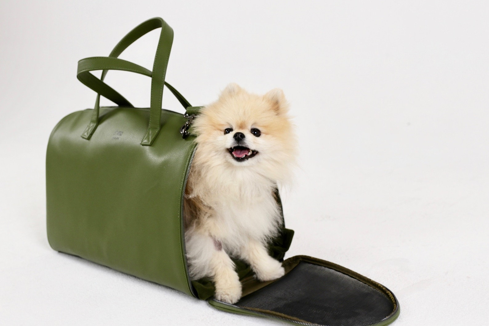 Dog peeking out of a carrier