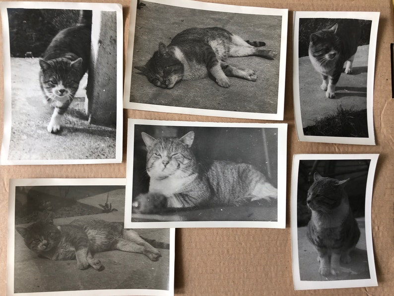 Animals Photo Collections #011-021 Dogs Job Lots of Vintage Photographs Toy Train Set Ships Boats Cats Birds Horses Puppies