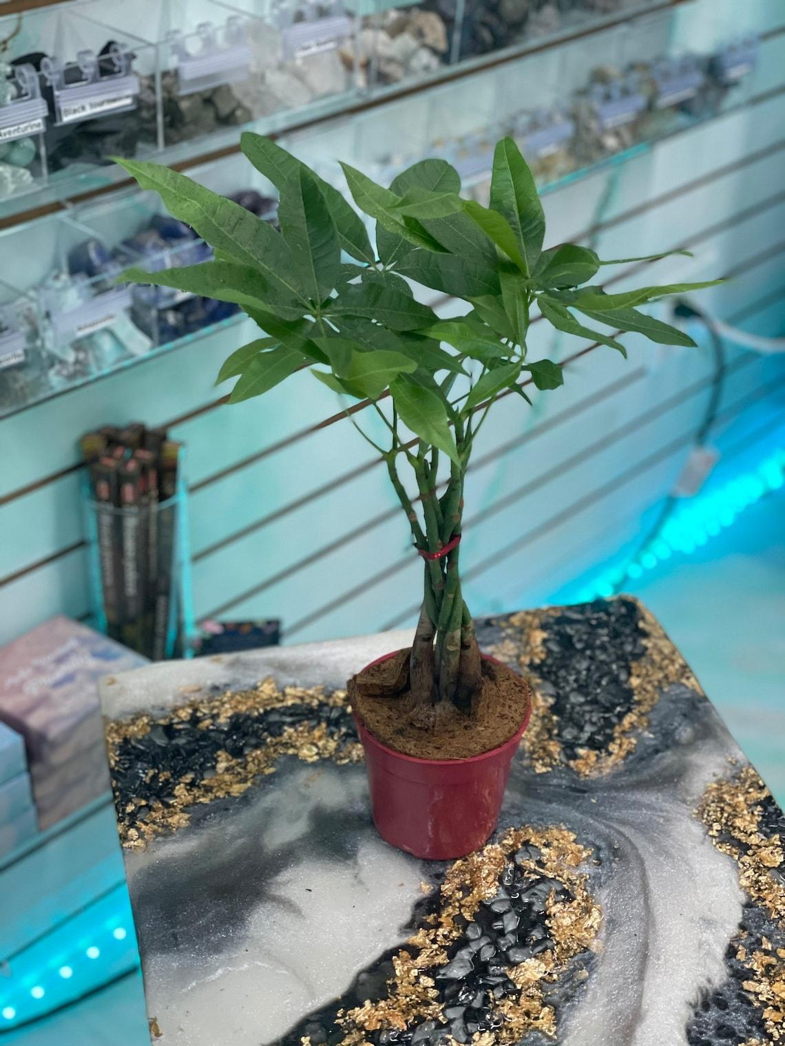Money Tree image 3