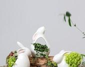 Cute Rabbit Plant Pot, Rabbit Planter, Rhinoceros Gifts, Ceramic Planter, Animal Planter, Succulent Planter No Plant