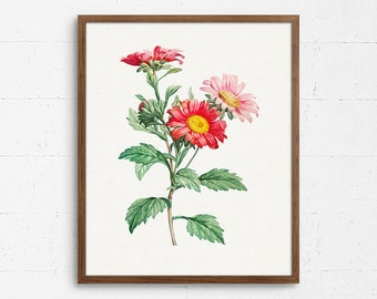 Aster Blossom Poster Cottage Aster Poster Floral Home Decor E11/_17 Botany Kitchen Decor Aster Print Aster Art Print Aster Wall Art