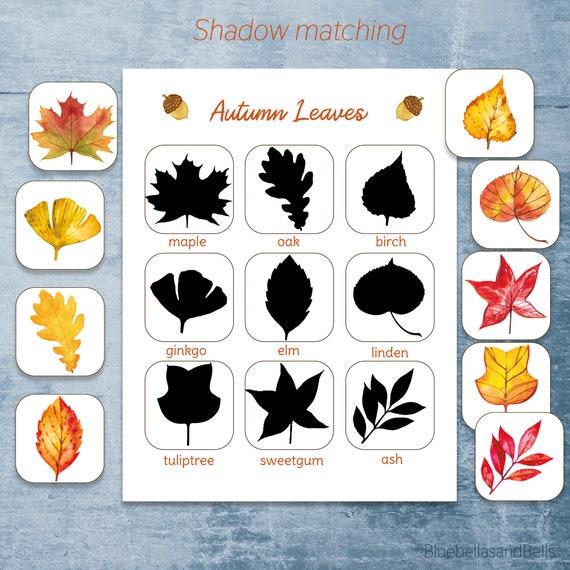 Fall leaf Montessori printable. Leaf identification preschool
