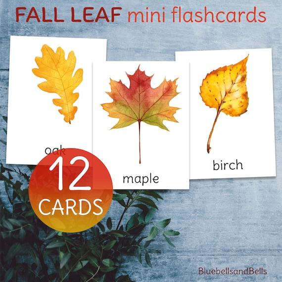 Autumn leaf identification mini flashcards. Watercolor fall