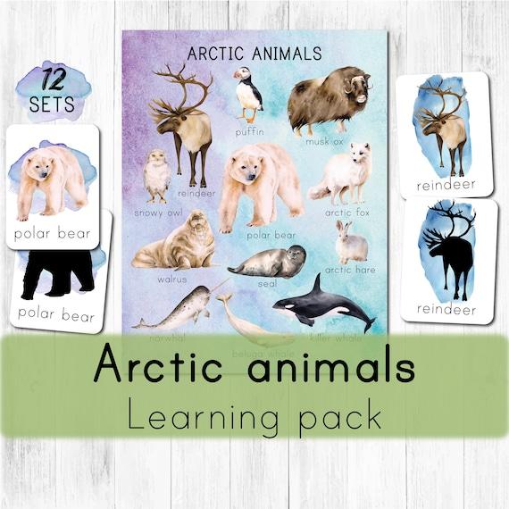 Arctic animals Montessori printable. North pole animals