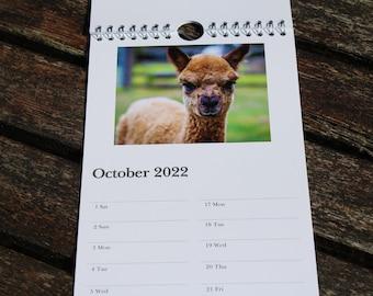 Alpaca Calendar 2022