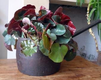 Antique Cast Iron Pot with Handle, T & C Clark Co, Plant Pot Holder, Decor, Prop