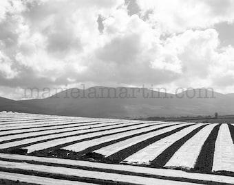 Black and white photograph Ireland, Irish field, Irish farming, Irish mountain, Knockmealdown, County Tipperary, photograph print