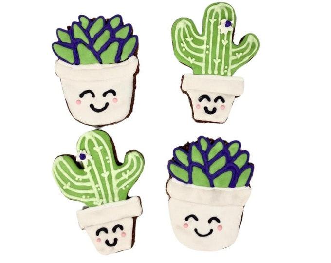 Succulent treat pack!