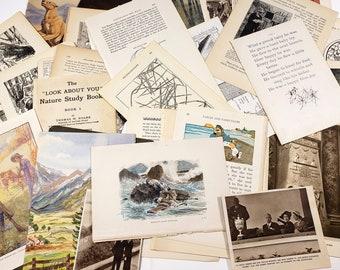 Lucky Dip Ephemera Pack - 50 sheets of random illustrations, book pages, vintage paper ephemera for junk journaling, scrapbooks, collage etc
