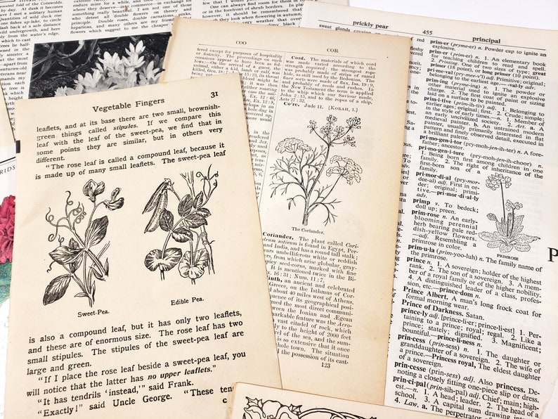 Vintage FLOWERS Illustrations 19th-20th Century Botanicals 20+ pieces Ephemera for journalings scrapbooks etc. Mixed Paper Pack