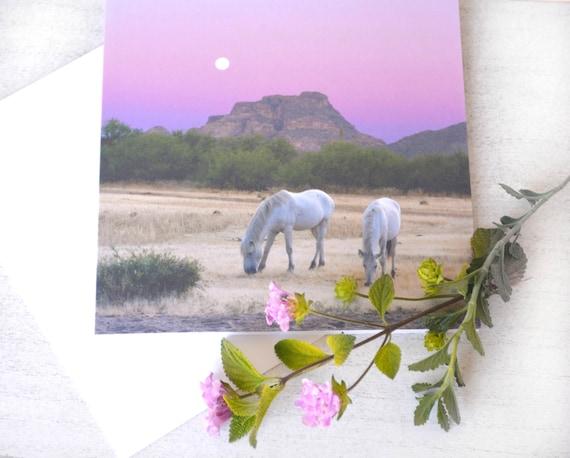 Wild Horse Sunset Card