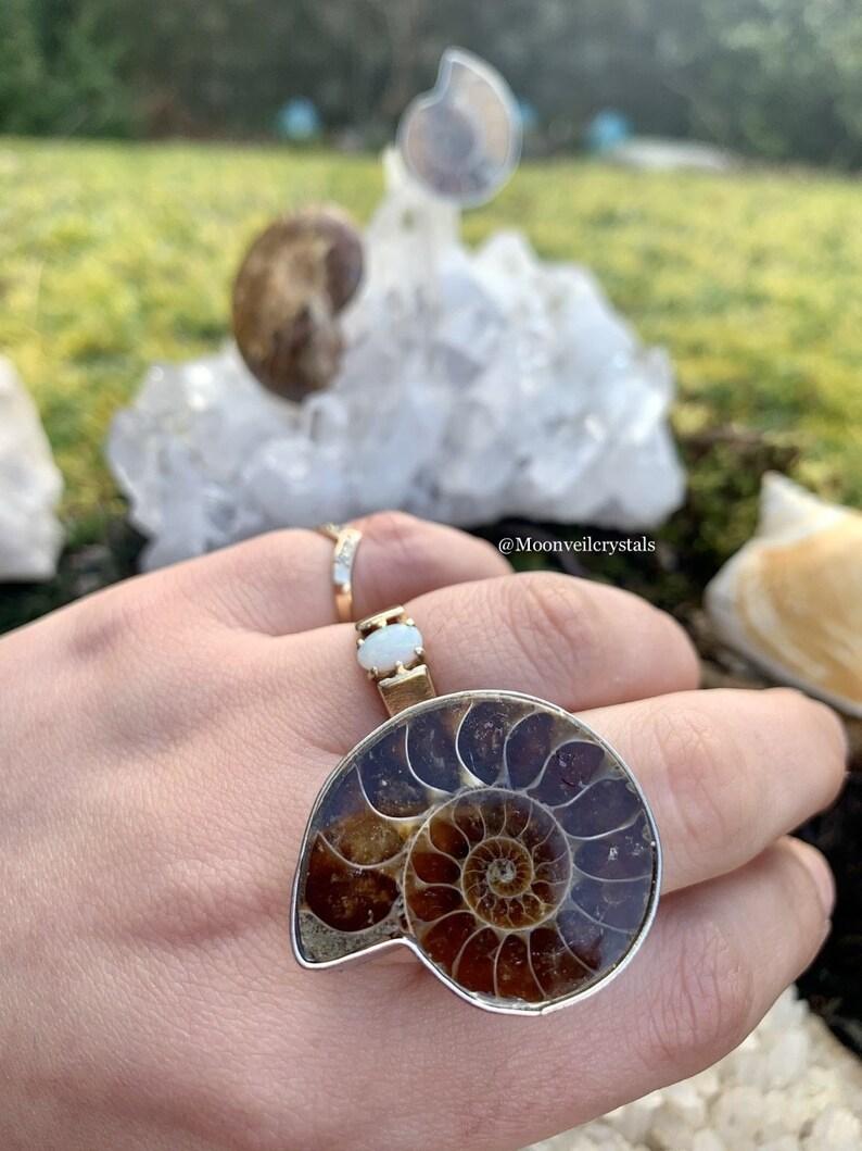 Adjustable Ammonite Shell Silver Ring