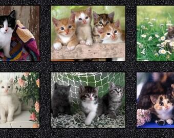 "Somebody to Love~Kittens Digital Panel 23"" x 44""  Cotton Fabric by Windham Fabrics"