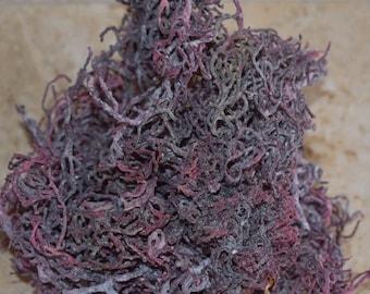 1lb- Purple St. Lucia Sea Moss - Wildcrafted - Deep Ocean GRADE A