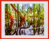 Red Leaf | Photograph. Instant Digital Download in Five Sizes. Reeds and Leaves in Water. Home Print Wall Art.