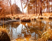 Brown Forest Pool Photo | Instant Digital Download in Four Sizes | Swinley Forest Bracknell Berkshire, England.