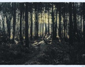 Forest Glow. Digital Download. 2x3 Ratio Image.