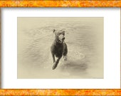Vintage Poodle Dog Leaping from Water. Vintage Style Photo. Instant Digital Download in Five Sizes. Print at Home.