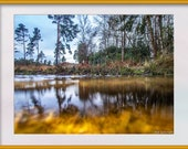 Forest Pool in Winter Photo to Download. A Golden Pool taken at Water Level Part of the Aqua Collection. Digital Download in Four Sizes.