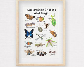 Australian Insects and Bugs Poster, Hand-draw Aussie Wildlife Print, Kids Room Illustrations, Nursery Wall Art, Printed to A2 A3 & A4 size