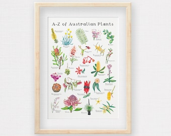 A-Z of Australian Native Plants, Botanical Print, Hand Drawn Illustrations making an Alphabet of Wildflowers. Printed to A2 A3 and A4