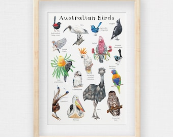Australian Birds Poster, Native Wildlife, Hand-drawn, Kids Room Illustrations, Kids Learning Resource, Printed to A2 A3 or A4