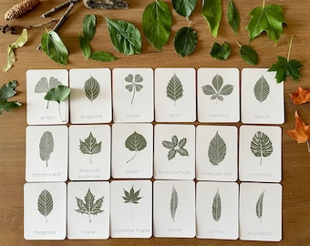 Tree Leaf Identification Cards, Montessori Materials Printable, Forest Schooling, Fall Foliage Nature Study Printable, Homeschool Learning