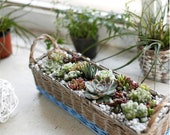 Euler 39 s creative wicker basket, hand woven flower arrangement, rattan flower pot, simple garden, multi meat pot flower device