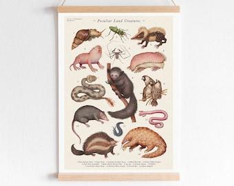 Peculiar Land Creatures - Art Print