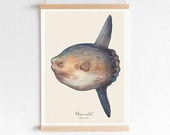 Ocean Sunfish - A4 Art Print