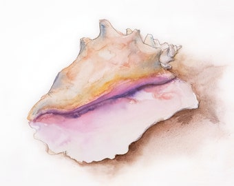 Conch Shell #2 5x7 Card