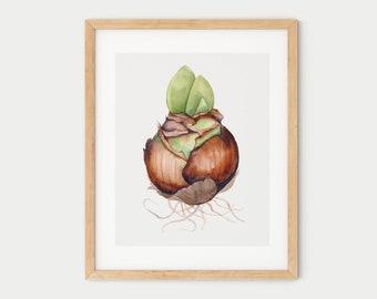 Flower bulb | Watercolor print poster | Elegant wall art | Botanical vintage floral illustration