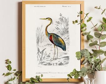 F Heron Gagging Down A Fish Art Print Home Decor Wall Art Poster