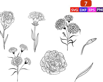 JPG White Yellow Colored Prom Flower  PNG Red SVG Eps Carnation Flower Colored Drawing Vector Clipart Set  Pink Purple