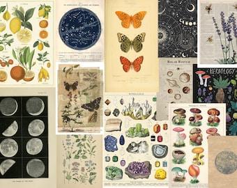 Vintage Nature Botanical & Astronomy Chart Aesthetic Prints Photowall Collage Kit 10/15/20/30/40/50 Photos 6x4