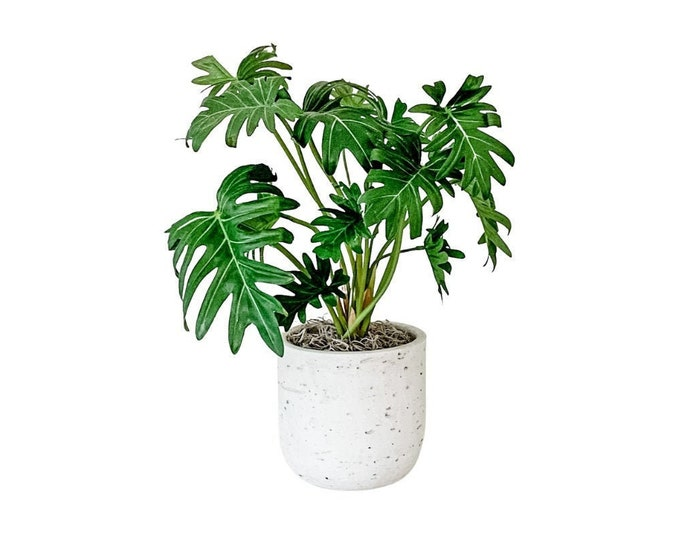 Faux Mini Potted Split Leaf Philodendron Plant